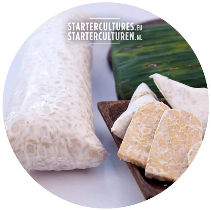 Tempeh startercultures.eu