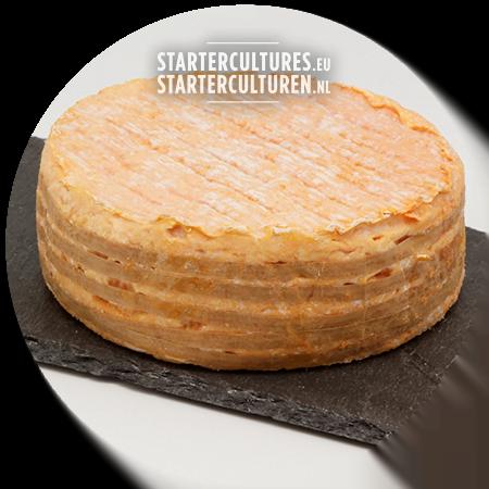 red smear cheese Brevibacterium Linens startercultures.eu